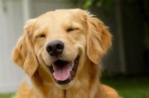 Εκπαίδευση εντολών σκύλου – Τα 8 συστατικά της επιτυχίας (του Βασίλη Ιωάννου)