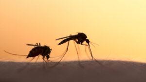 Πρόγραμμα ψεκασμών της Περιφέρειας Δυτ. Μακεδονίας για την καταπολέμηση των κουνουπιών